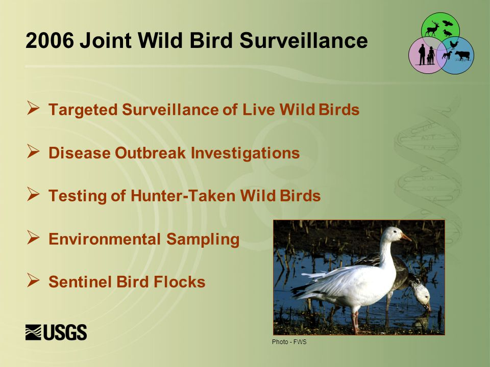  Targeted Surveillance of Live Wild Birds  Disease Outbreak Investigations  Testing of Hunter-Taken Wild Birds  Environmental Sampling  Sentinel Bird Flocks Photo - FWS 2006 Joint Wild Bird Surveillance