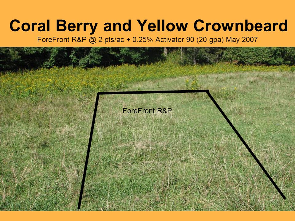 Coral Berry and Yellow Crownbeard ForeFront R&P @ 2 pts/ac + 0.25% Activator 90 (20 gpa) May 2007 ForeFront R&P