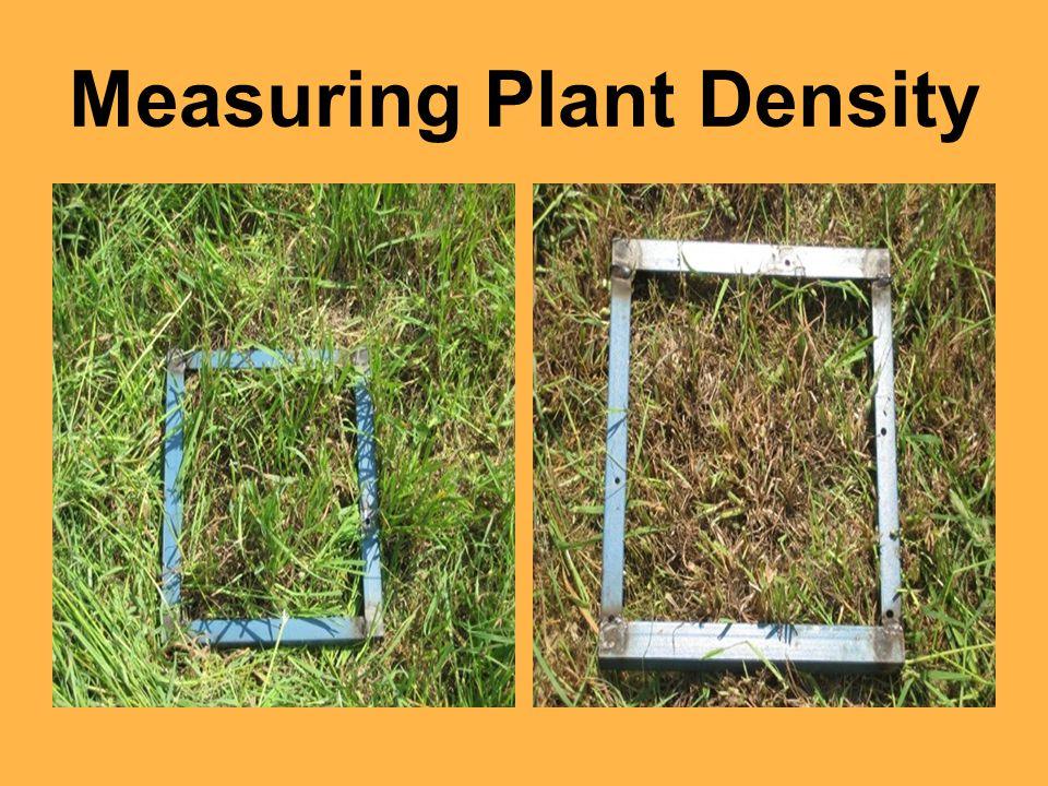 Measuring Plant Density