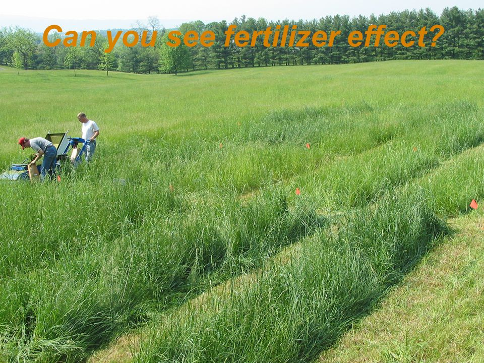 Can you see fertilizer effect?