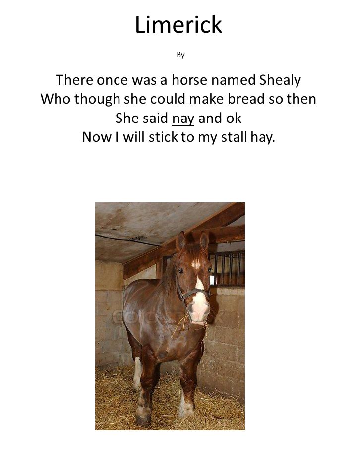 Limerick There once was a horse named Shealy Who though she could make bread so then She said nay and ok Now I will stick to my stall hay. By
