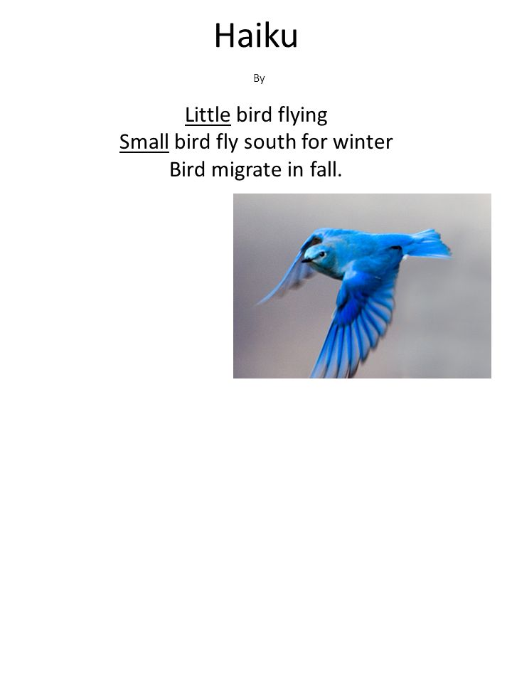 Haiku Little bird flying Small bird fly south for winter Bird migrate in fall. By