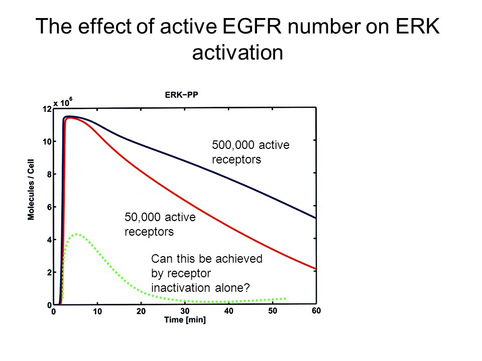 The effect of active EGFR number on ERK activation 500,000 active receptors 50,000 active receptors Can this be achieved by receptor inactivation alone?