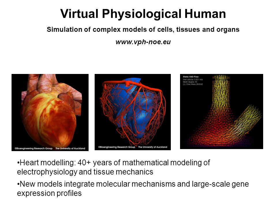 Virtual Physiological Human Simulation of complex models of cells, tissues and organs www.vph-noe.eu Heart modelling: 40+ years of mathematical modeling of electrophysiology and tissue mechanics New models integrate molecular mechanisms and large-scale gene expression profiles