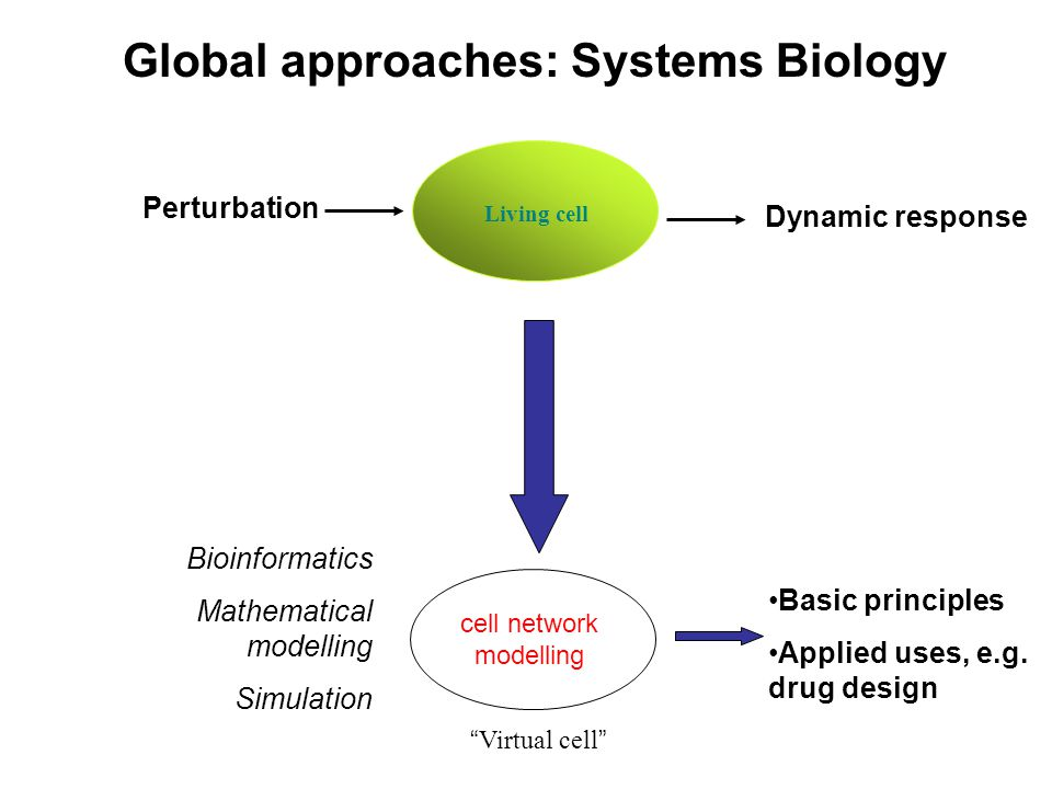Living cell Virtual cell Perturbation Dynamic response Basic principles Applied uses, e.g.