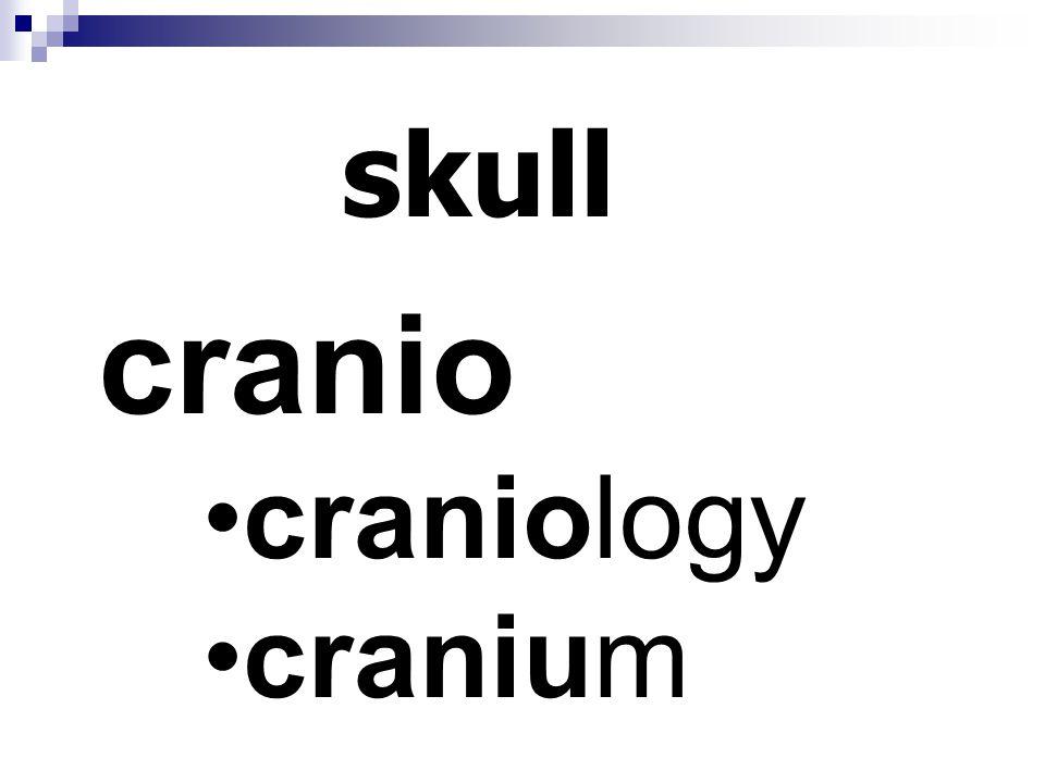 skull cranio craniology cranium