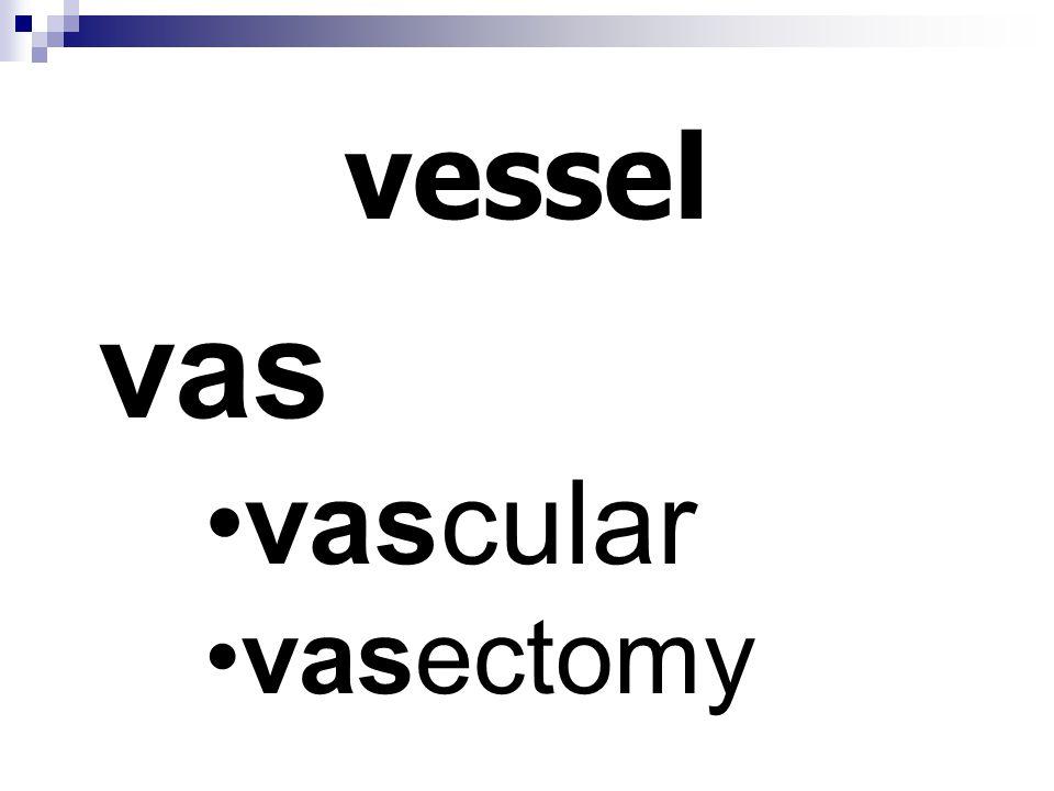 vessel vas vascular vasectomy