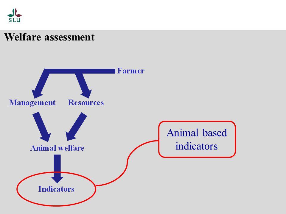 Welfare assessment Animal based indicators