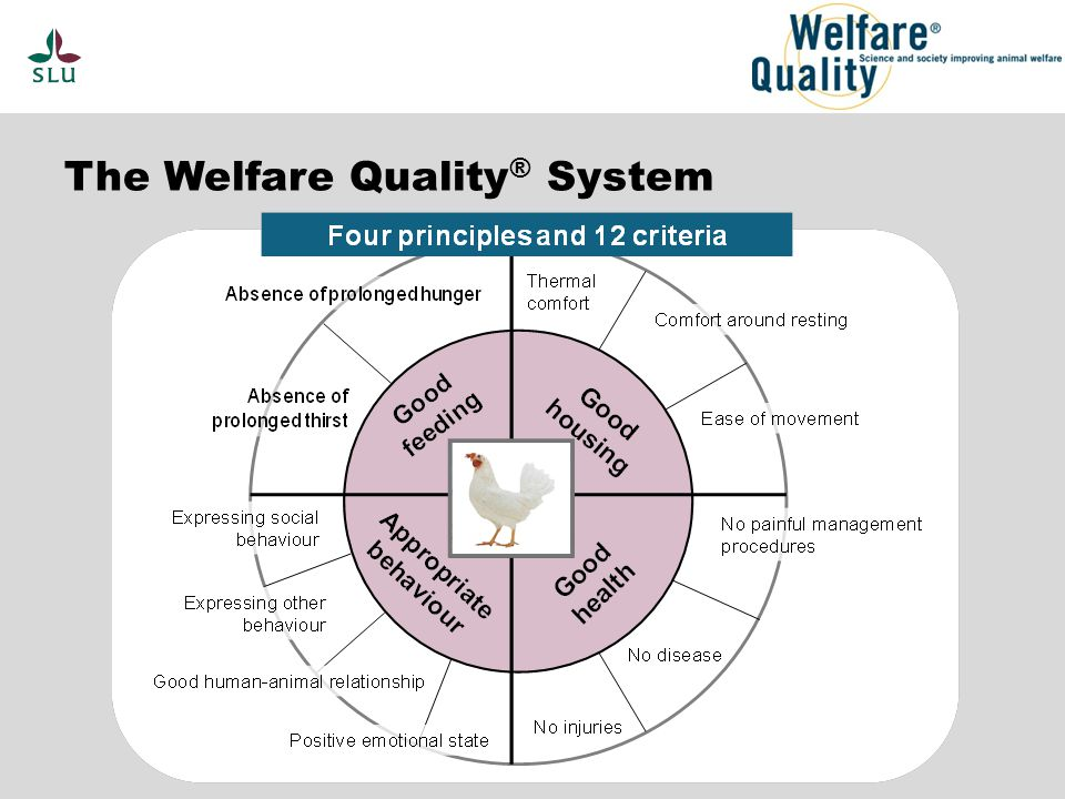 The Welfare Quality ® System