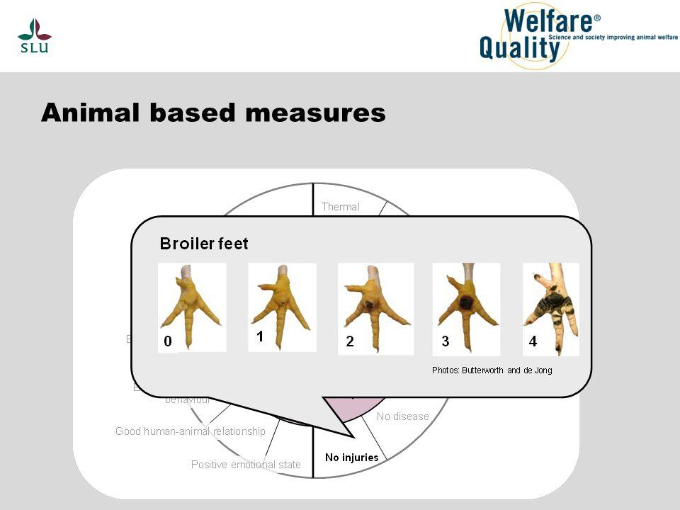 Animal based measures
