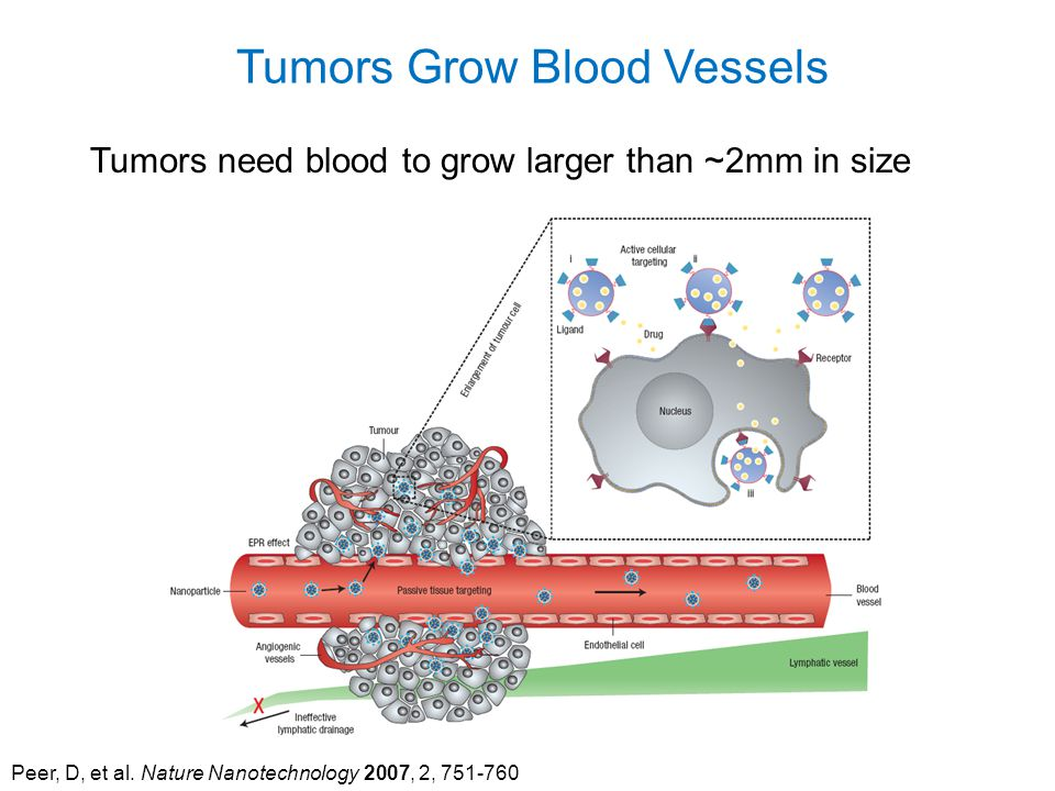 Peer, D, et al. Nature Nanotechnology 2007, 2, 751-760 Tumors Grow Blood Vessels Tumors need blood to grow larger than ~2mm in size