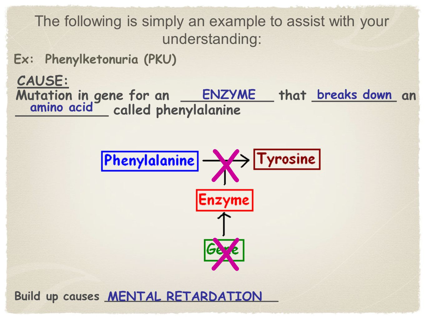 Ex: Phenylketonuria (PKU) CAUSE: Mutation in gene for an ___________ that __________ an ___________ called phenylalanine Build up causes _____________