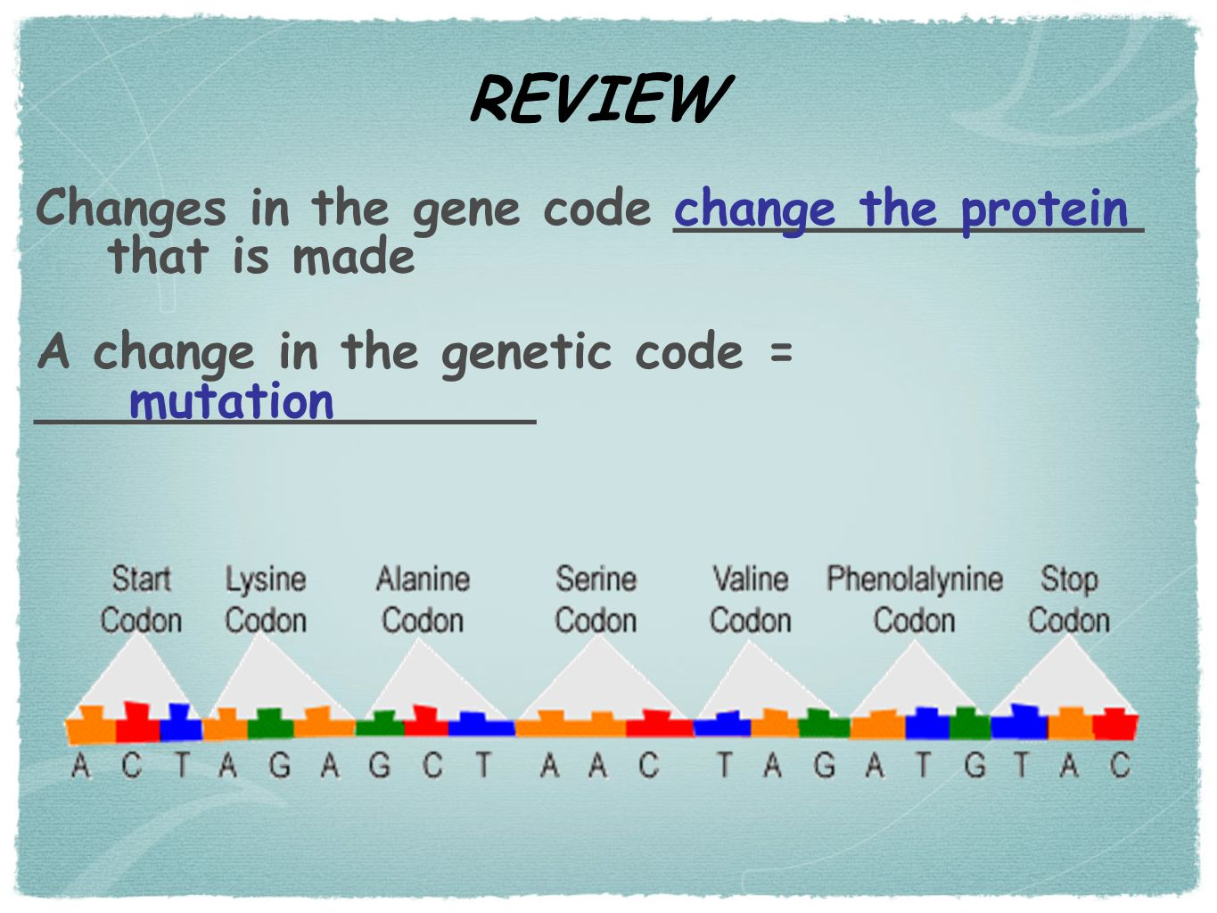 Changes in the gene code _______________ that is made A change in the genetic code = ________________ mutation change the protein REVIEW