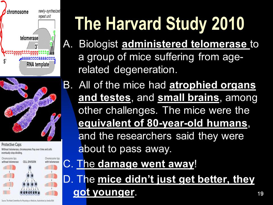 The Harvard Study 2010 A. Biologist administered telomerase to a group of mice suffering from age- related degeneration. B. All of the mice had atroph