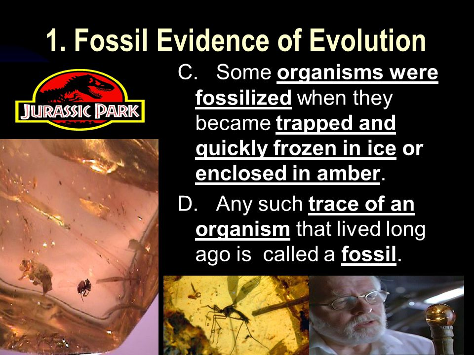 5/2/201528 1. Fossil Evidence of Evolution C.