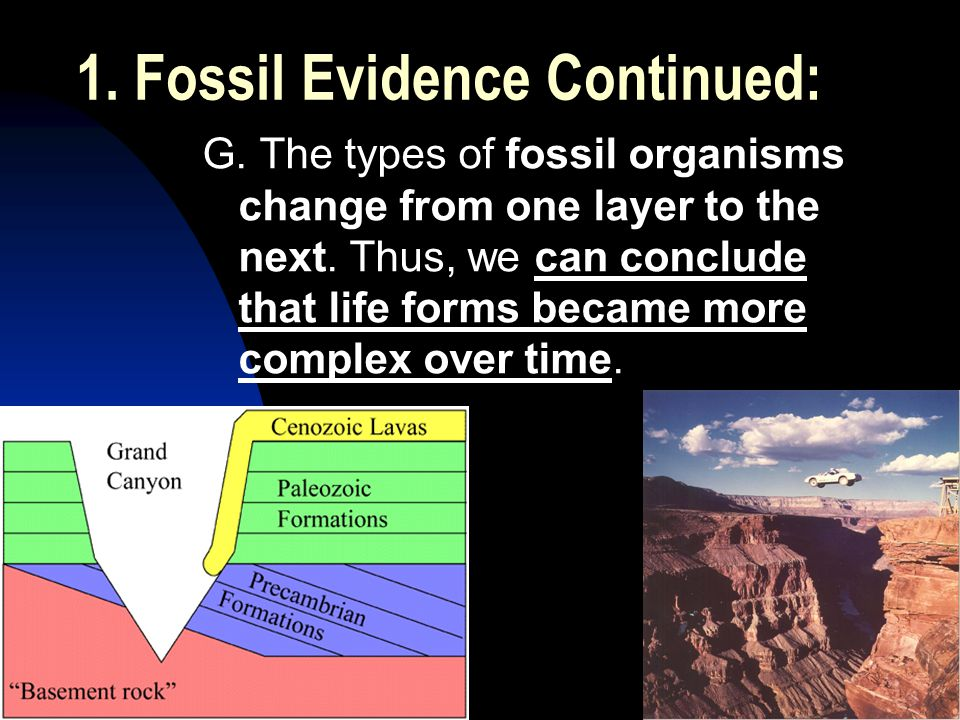 5/2/201531 1. Fossil Evidence Continued: G. The types of fossil organisms change from one layer to the next. Thus, we can conclude that life forms bec