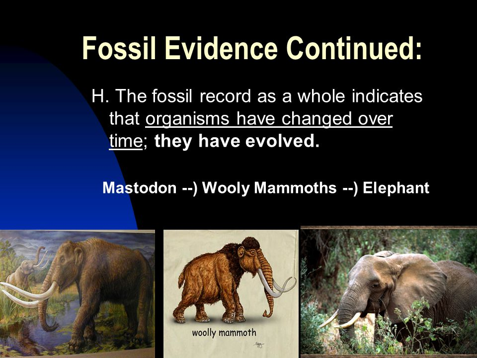 5/2/201532 Fossil Evidence Continued: H.