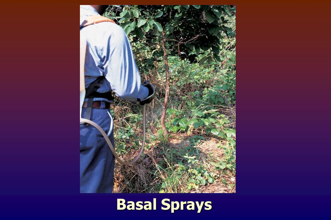 Basal Sprays
