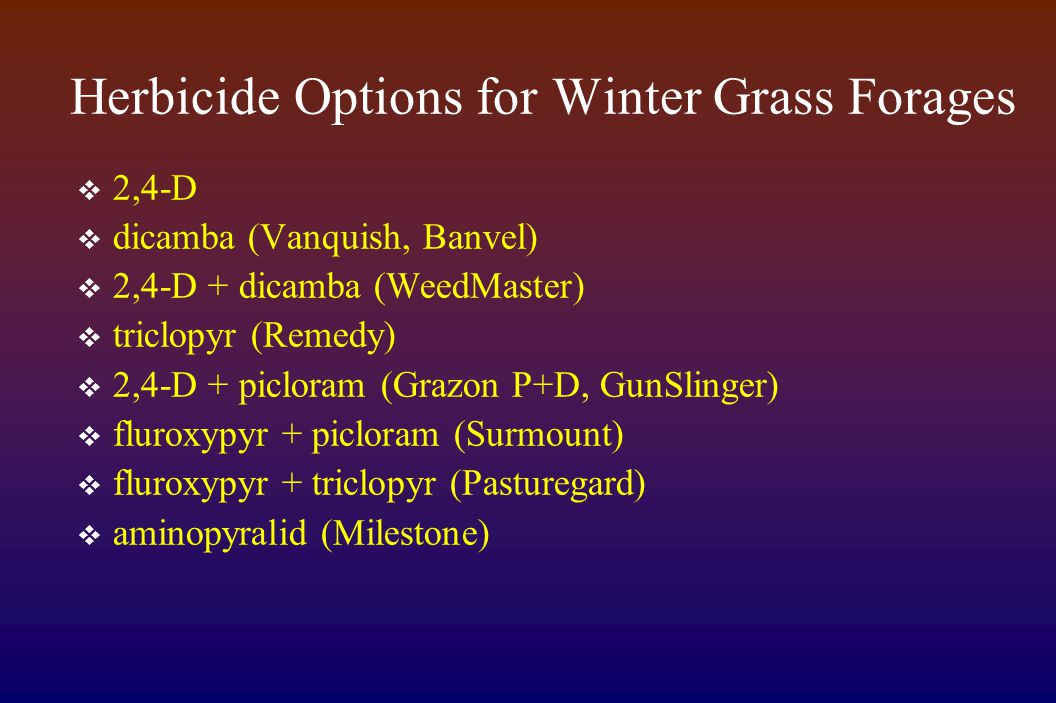 Herbicide Options for Winter Grass Forages  2,4-D  dicamba (Vanquish, Banvel)  2,4-D + dicamba (WeedMaster)  triclopyr (Remedy)  2,4-D + picloram (Grazon P+D, GunSlinger)  fluroxypyr + picloram (Surmount)  fluroxypyr + triclopyr (Pasturegard)  aminopyralid (Milestone)