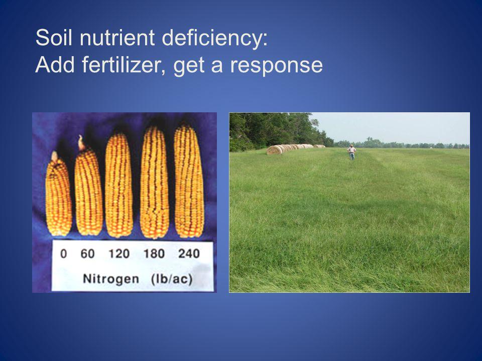 Soil nutrient deficiency: Add fertilizer, get a response