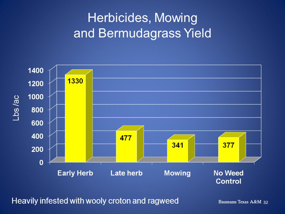 32 Herbicides, Mowing and Bermudagrass Yield Lbs /ac Heavily infested with wooly croton and ragweed Baumann Texas A&M