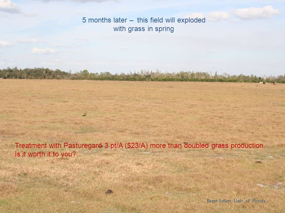 5 months later – this field will exploded with grass in spring Treatment with Pasturegard 3 pt/A ($23/A) more than doubled grass production. Is it wor