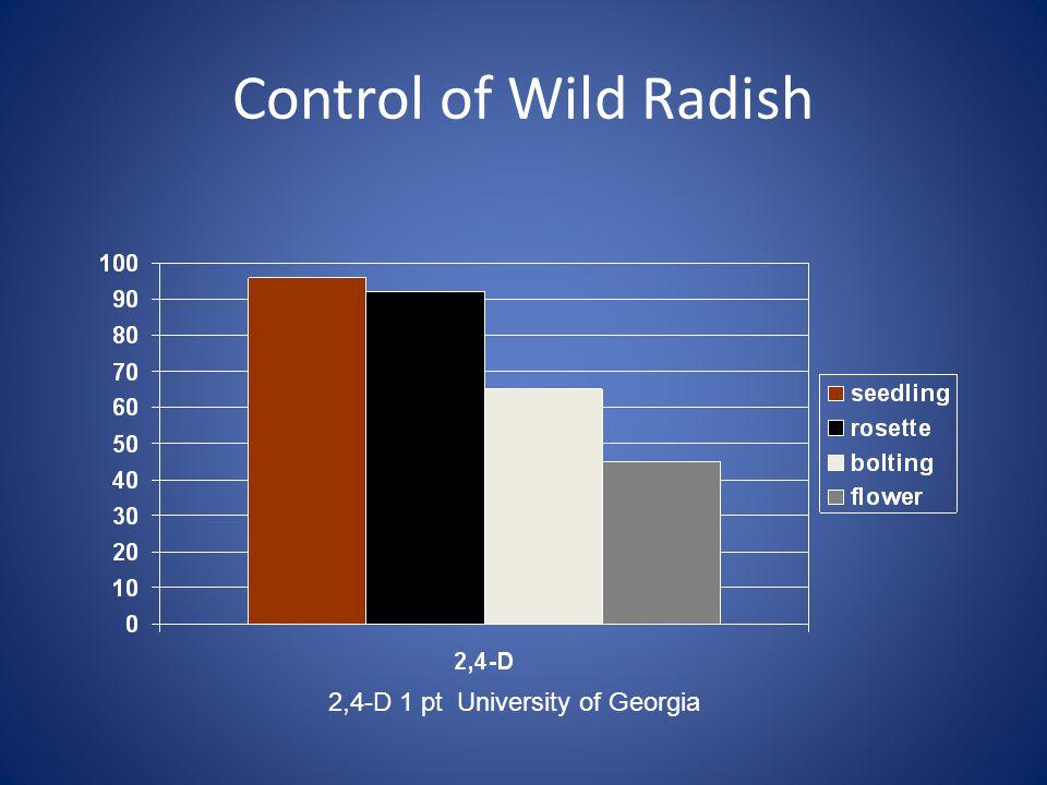 Control of Wild Radish 2,4-D 1 pt University of Georgia