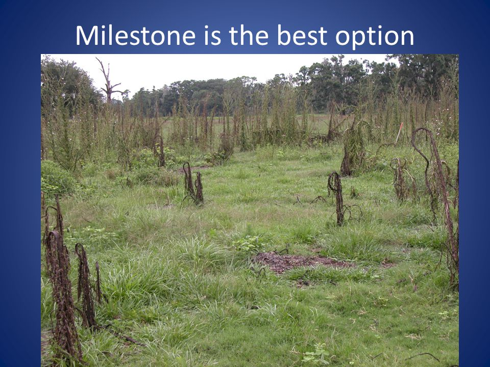 Milestone is the best option
