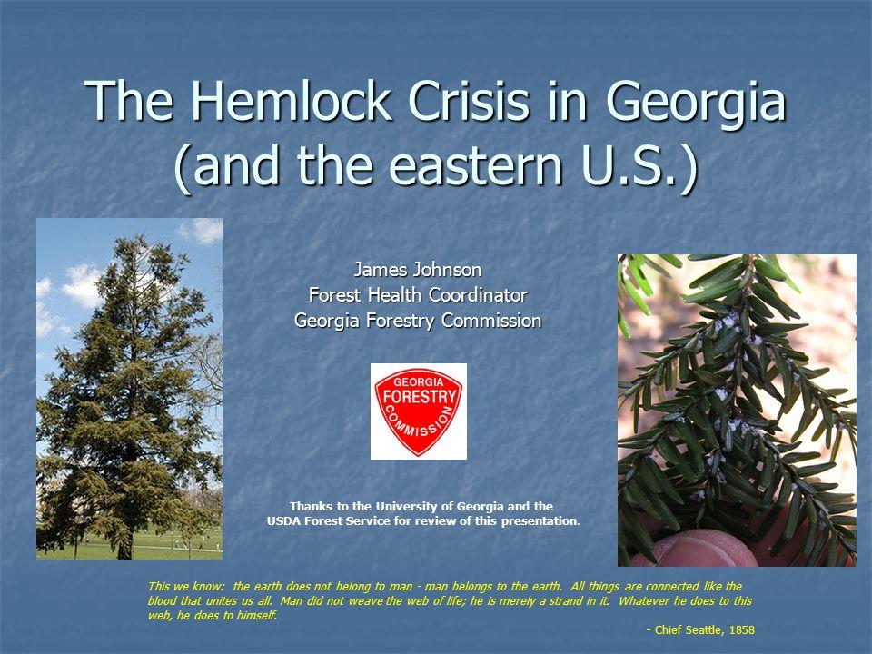 Eastern Hemlock – a Unique Tree.