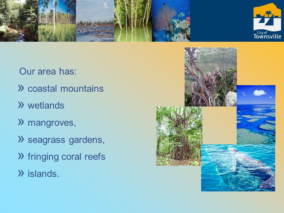 Our area has: » coastal mountains » wetlands » mangroves, » seagrass gardens, » fringing coral reefs » islands.