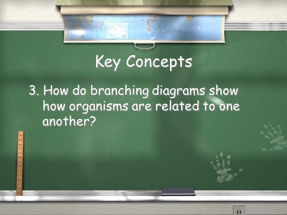 Key Concepts 3. How do branching diagrams show how organisms are related to one another?