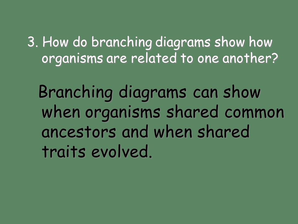 Branching diagrams can show when organisms shared common ancestors and when shared traits evolved. 3. How do branching diagrams show how organisms are