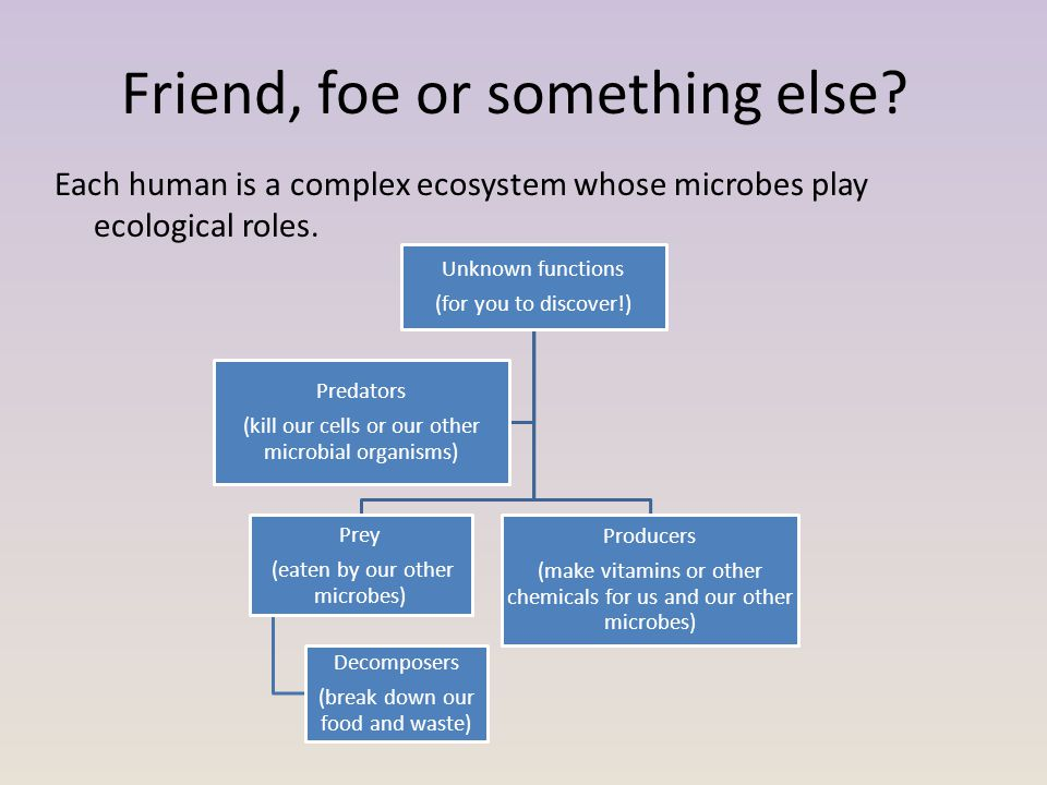 Friend, foe or something else? Each human is a complex ecosystem whose microbes play ecological roles. Unknown functions (for you to discover!) Prey (
