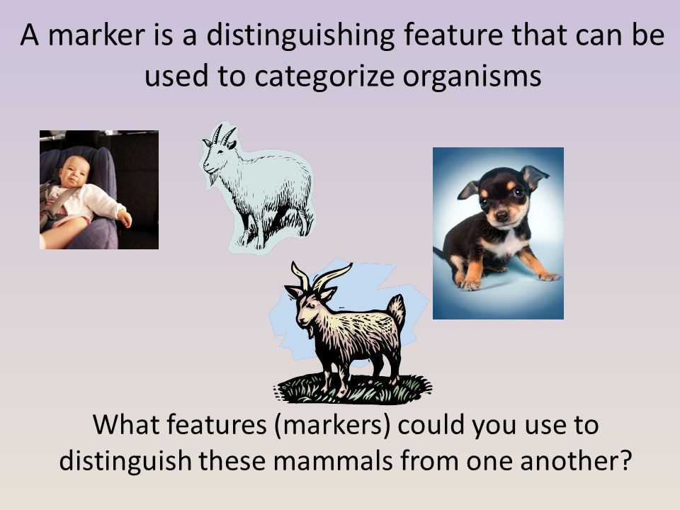 What features (markers) could you use to distinguish these mammals from one another.