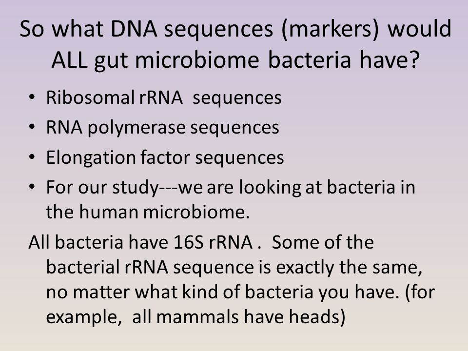 So what DNA sequences (markers) would ALL gut microbiome bacteria have? Ribosomal rRNA sequences RNA polymerase sequences Elongation factor sequences