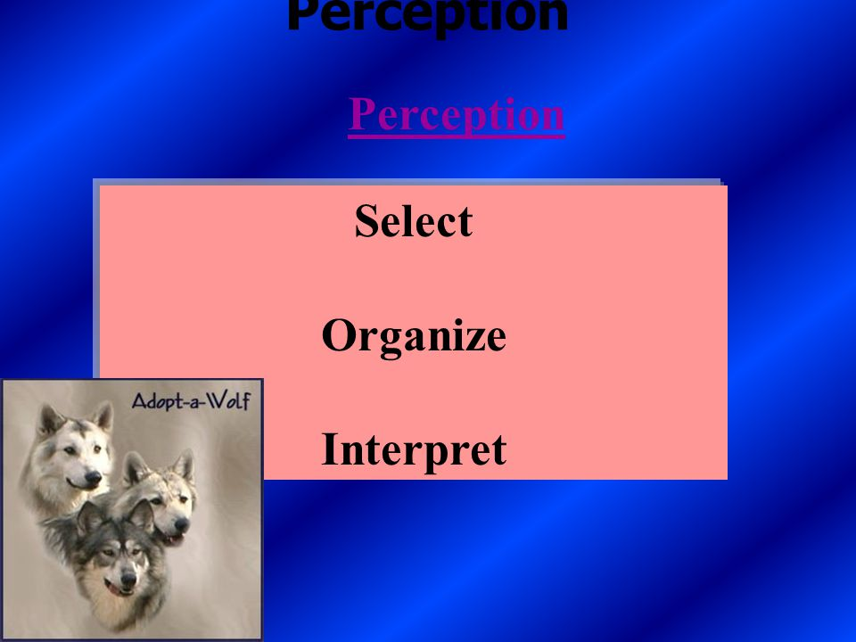 Chapter 6 Perception and Individual Decision