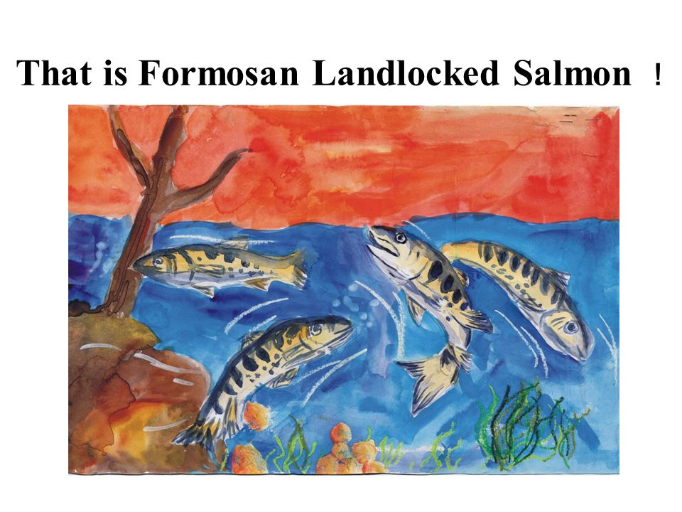 That is Formosan Landlocked Salmon !