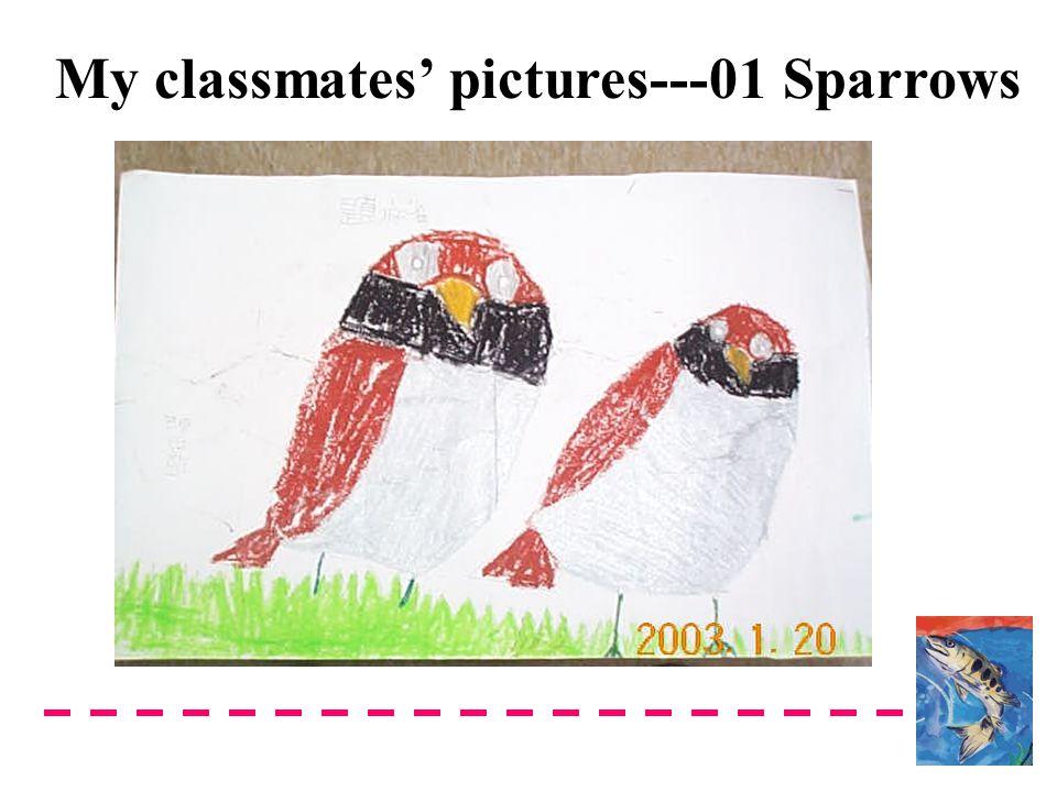 My classmates' pictures---01 Sparrows