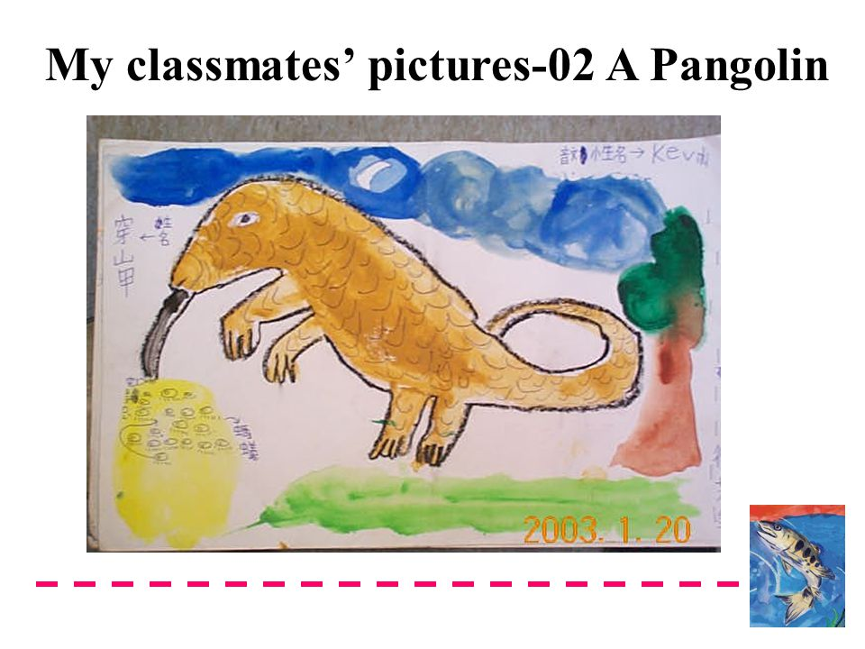 My classmates' pictures-02 A Pangolin