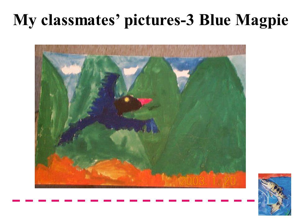 My classmates' pictures-3 Blue Magpie