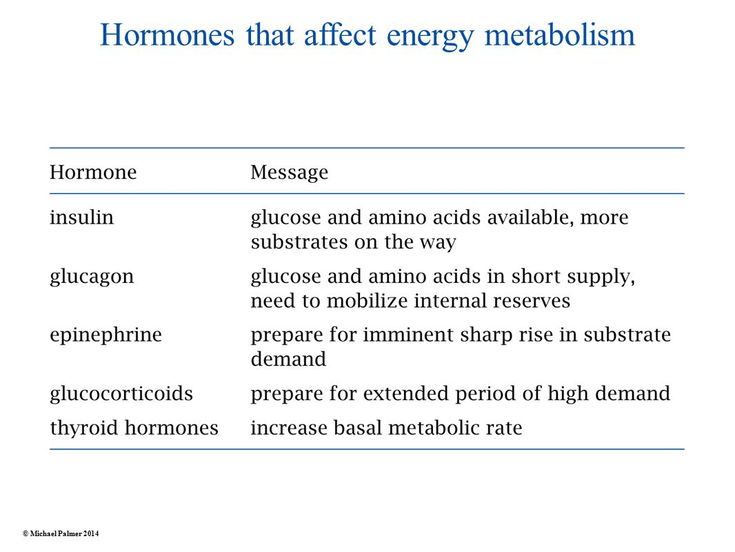 Hormones that affect energy metabolism © Michael Palmer 2014