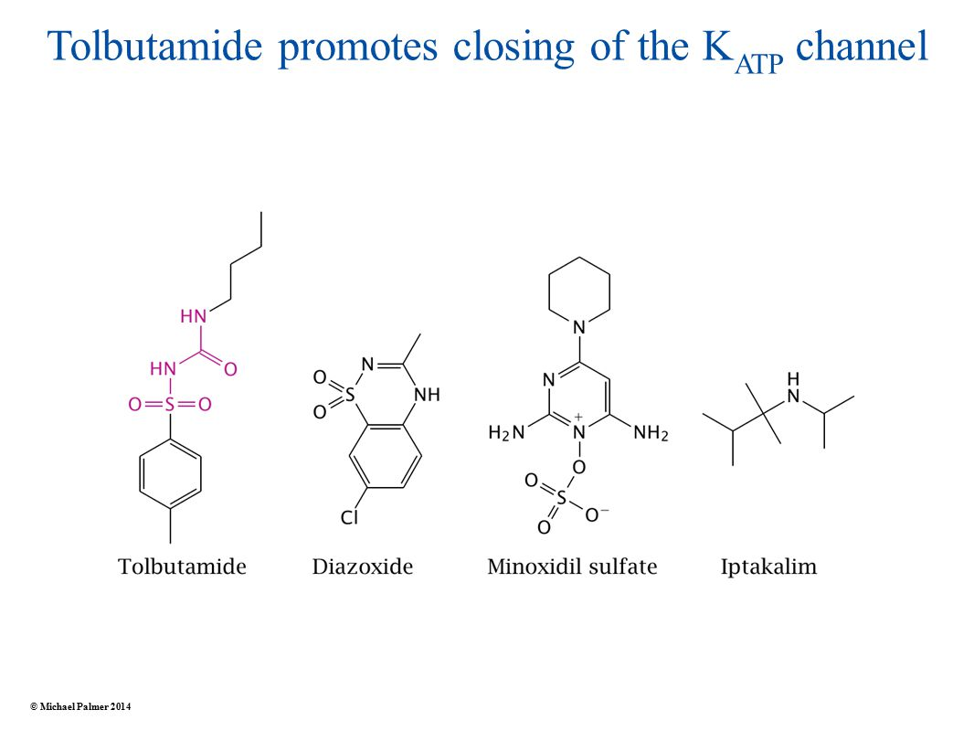Tolbutamide promotes closing of the K ATP channel © Michael Palmer 2014