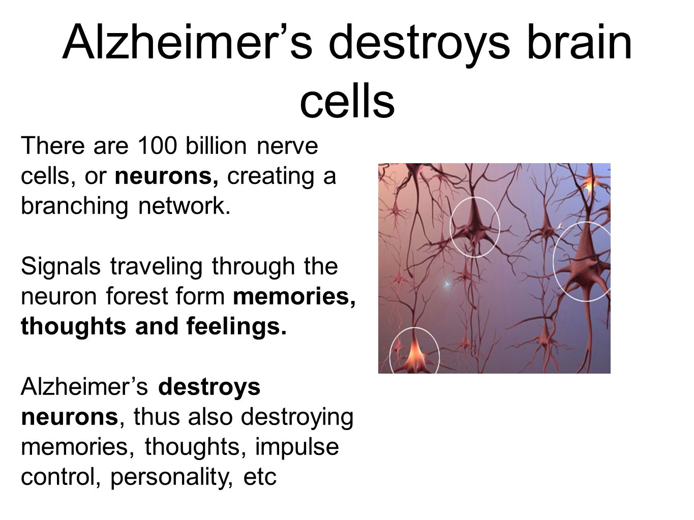 Alzheimer's destroys brain cells There are 100 billion nerve cells, or neurons, creating a branching network.
