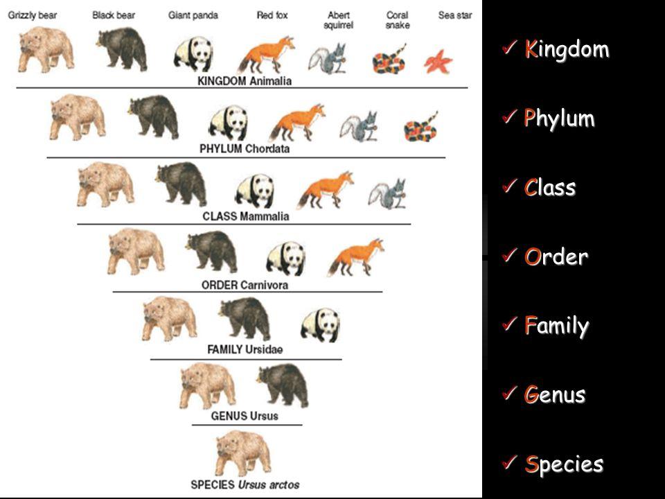 Kingdom Kingdom Phylum Phylum Class Class Order Order Family Family Genus Genus Species Species