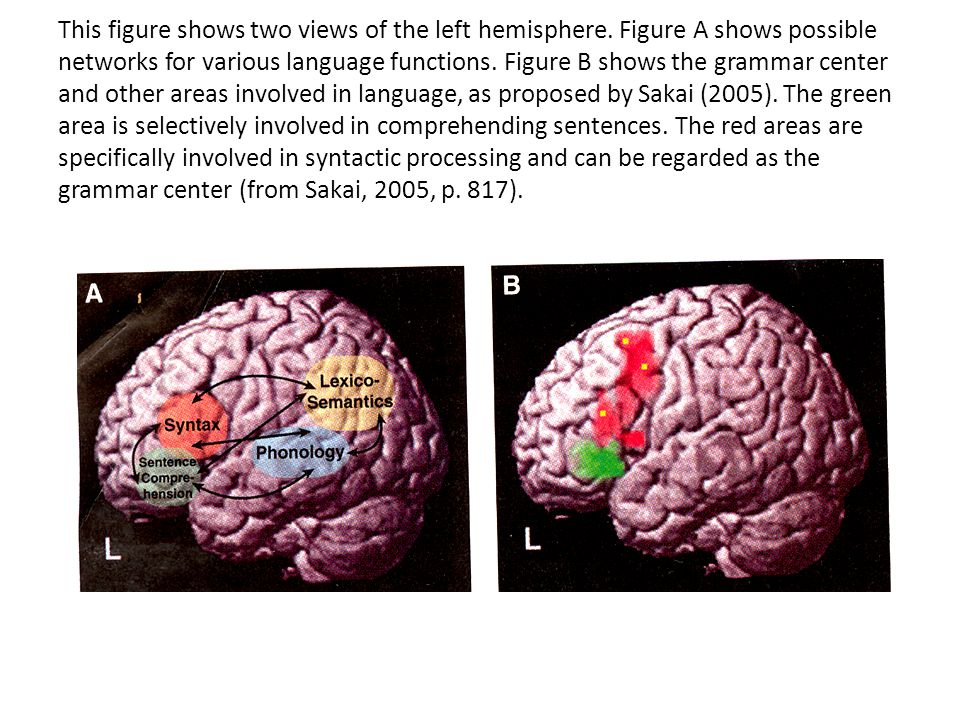 This figure shows two views of the left hemisphere.