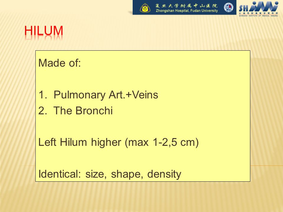 Made of: 1. Pulmonary Art.+Veins 2.