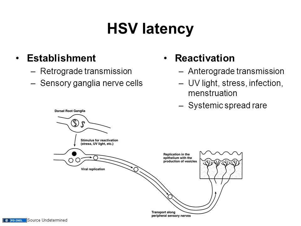 HSV latency Establishment –Retrograde transmission –Sensory ganglia nerve cells Reactivation –Anterograde transmission –UV light, stress, infection, menstruation –Systemic spread rare Source Undetermined