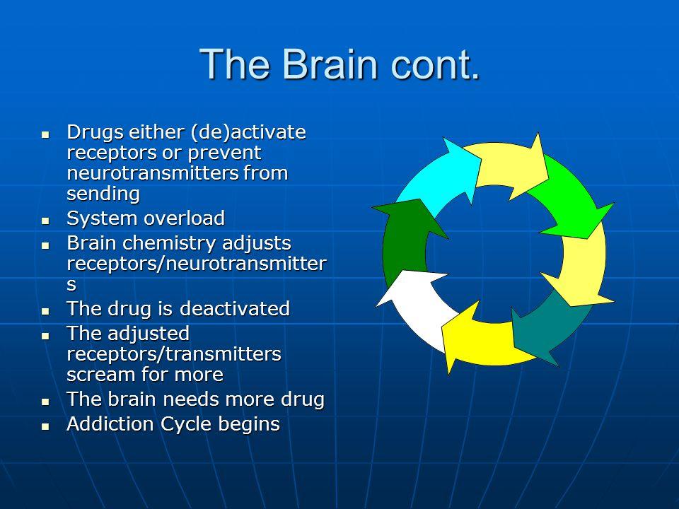 The Brain cont.