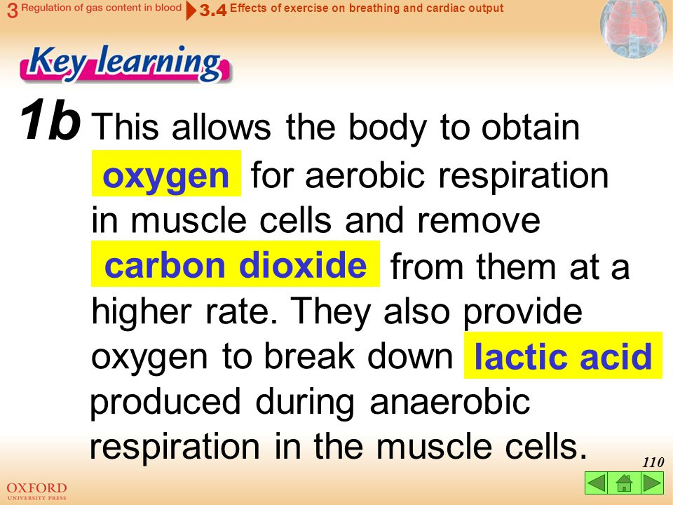 109 a During exercise, both the rate and depth of breathing. 1 increase 3.4 Effects of exercise on breathing and cardiac output