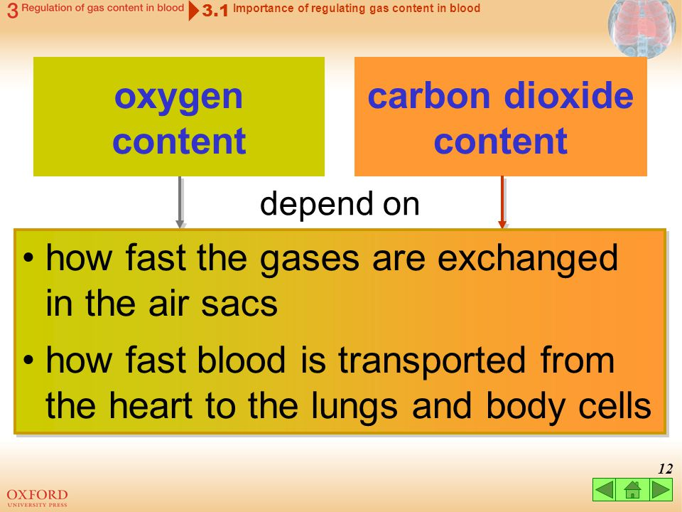 11 3.1 Importance of regulating gas content in blood oxygen content carbon dioxide content affects blood pH affects functioning of enzymes affects blo